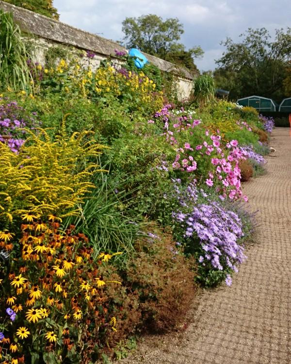 Oxford Botanic Garden Perennial Border